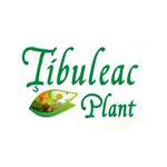 Tibuleac Plant