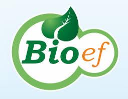 Bioef Vitalact